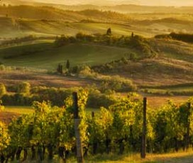 Chianti Colors and Flavors Tour