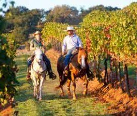 Les vignobles du Chianti: excursion à cheval