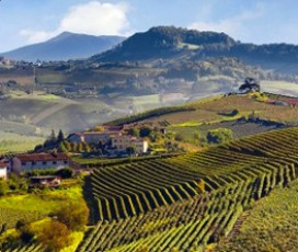 Wine Tour Piedmont: Langhe-Roero and Monferrato Areas